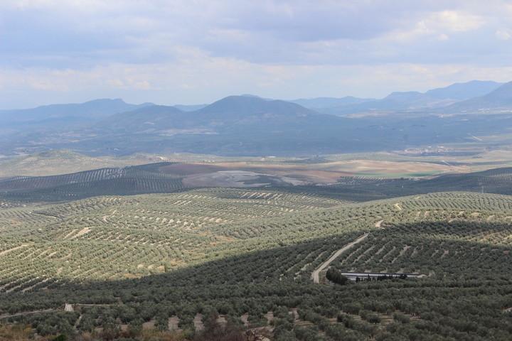 Los Cerros de Úbeda